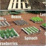 The 20 best design ideas for vegetable gardens for an environmentally conscious life - garden