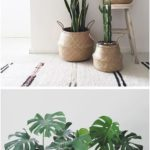 9 great ideas for houseplants #like #ideas #houseplants