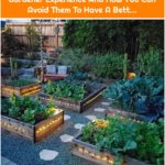 The Top Mistakes Of My Beginner Gardener Experience And How You Can Avoid Them To Have A Bett...