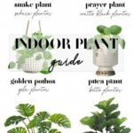 How to decorate with house plants // Indoor plant and planter pairing guide // J...