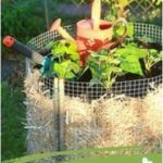 Harvest potatoes in the smallest space - with the potato tower If you only ...