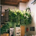 Green plants determine your ambience - decorate with indoor plants