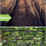 DIY Bean Trellis for any vegetable garden - house decorations