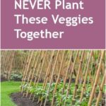 NEVER Plant These Veggies Together - Bless My Weeds| Gardening for Beginners Veg...
