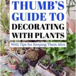 Decorating with Plants#decorating #plants