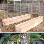 Building a vegetable garden if you plan to plant cucumber melons and ...
