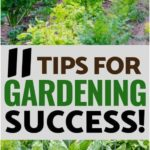 Gardening for beginners: 11 tips for a successful start, #beginners #conseilsdejardinpourles...