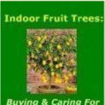 Indoor Lime Trees # Design #Model #Dress #Shoes # Wheels #Styles #Outgoing#desig...
