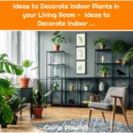 Ideas to Decorate Indoor Plants in your Living Room - Ideas to Decorate Indoor ...