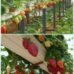 10 space-saving strawberry garden planters ideas Vegetable garden design, H ...