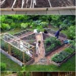 Small vegetable raised bed How To Build A Vegetable Patch | 39 Si