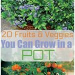 20 fruits and vegetables that you can grow in pots - # grow # the # vegetables ..., # grow #D ...