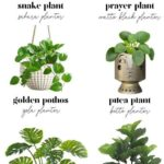 How to decorate with house plants // Indoor plant and planter pairing guide // ...