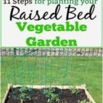 Tips for Growing Tomatoes and other Veggies in a Small Raised Bed Garden Tips f...