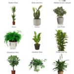 Houseplants for beginners #indoorplants Houseplants for beginners, #anfa ...
