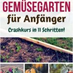 Vegetable garden e.g. Hd. Jungspund intensive course in 11 steps root system