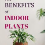Easy Indoor Plants to Decorate Your Space ~ Love your Home