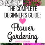 How to start a flower garden for beginners! A step-by-step guide ...
