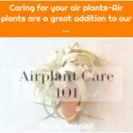 Caring for your air plants-Air plants are a great addition to our ...