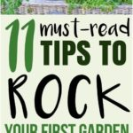 Gardening for beginners 11 tips for a successful start
