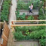 Vegetable Gardening Tips and Tricks | Planet Natural