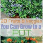 20 fruits and vegetables you can grow in pots - gardening - growing vegetables for beginners - helen blog