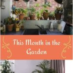 This Month in the Garden: Indoor Gardening-8 Ways to Decorate with Houseplants