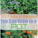 20 fruits and vegetables that you can grow in pots - garden