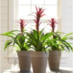 Simply Way to Decorate Home with Indoor Plants That Don't Need Sunlight - The Li...