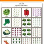 Simple tips for growing carrots - ideas tree