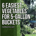 Container Vegetable Gardening Buckets Container Gardening