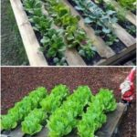 46+ Simple Raised Vegetable Garden Bed Ideas 2020 - FarmFoodFamily - Small garden ideas vegetable - Yirmiyedi Blog