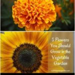 5 Flowers You Should Grow in the Vegetable Garden. Learn how your vegetable can ...