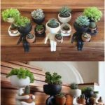 23+ Ways to Decorate Your Home With Succulents | momooze