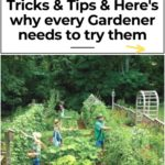9 Gardening tips that will make your garden productive