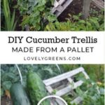 DIY Cucumber Trellis made from a Pallet - Pin Coffee | Cucumber trellis, Vegetab...