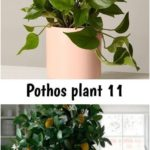 Pothos plant 11#plant #pothos To decorate with real plants means to create a ...