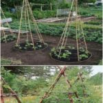 Affordable backyard vegetable garden designs ideas 51 - Affordable backyard veg...