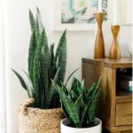 115+ Ideas to decorate your room with plants