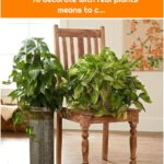 pothos-plants-chair-pedestal-cf43013e To decorate with real plants means to c...
